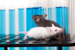 Six-month study of memory of mice at Salk Institute