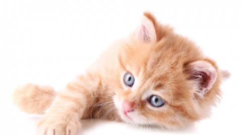 Orange is the new cat