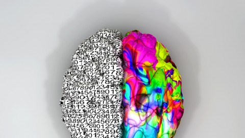 This is how your brain works