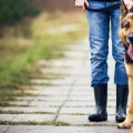 DEMENTIA DOGS, in-home care and street guide