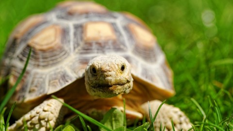 Be the tortoise, not the hare